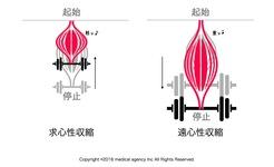 遠心性収縮・求心性収縮・等尺性収縮とエクササイズの生理学