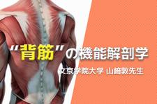 「浅背筋」と「深背筋」の機能解剖学 -タイプ比率から考える安定性機構-