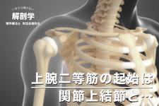 【いまさら聞けない】解剖学上腕二等筋の起始は関節上結節と…