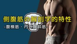 側腹筋の解剖学的特性 ~腹横筋・内外腹斜筋~ |文京学院大学 教授 山﨑敦先生