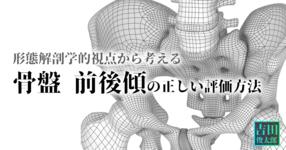 形態解剖学的視点から考える【骨盤 前後傾】の正しい評価方法|吉田俊太郎