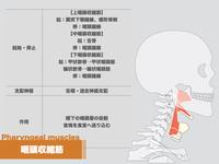 【イラスト】咽頭収縮筋の解剖学ー摂食・嚥下解剖シリーズー