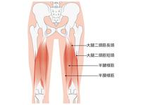 ハムストリングス(大腿二頭筋、半腱様筋、半膜様筋)の起始・停止とトレーニング/ストレッチ【肉離れ】