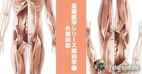 基礎医学シリーズ解剖学編―外腹斜筋―