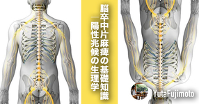 【基礎医学】脳卒中片麻痺の基礎知識|陽性兆候の生理学