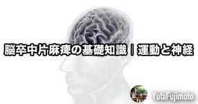 脳卒中片麻痺の基礎知識|運動と神経