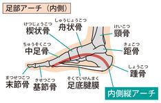 足部舟状骨の機能と構造|触診