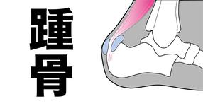 踵骨の機能と構造|触診