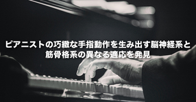 ピアニストの巧緻な手指動作を生み出す脳神経系と筋骨格系の異なる適応を発見