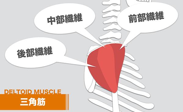 筋 痛 三角 筋肉 三角筋の痛みについて!過度な運動が原因?鍛えるのは何が効果的?